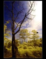 Just a tree by juhe