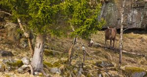 Red Deer in the spring dun by Zochion