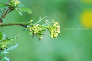 Macro in yellow and green by JulsBlack