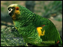 PapaMonk by DaSef