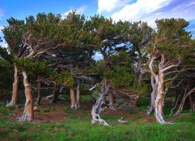 The Green Man's Dancing Trees by greenunderground