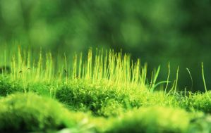 moss STOCK by thinking-fishSTOCK