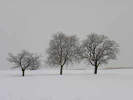 The Three Trees in Winter by artamusica