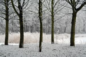winterland 38 by priesteres-stock