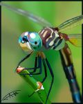 Dragonfly by Jats