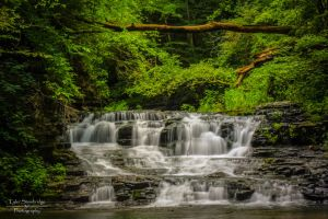 Waterfall Streams (Tree II) by SparkVillage