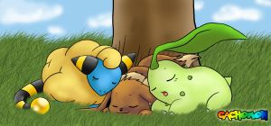 Mareep, Eevee and Chikorita by Cachomon
