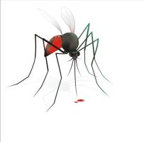 mosquito by Petine