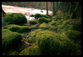 Mossy Scotland by Dimitri86