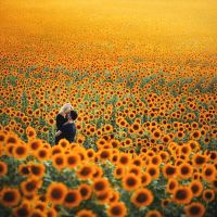 Fields of Gold.. by Khomenko