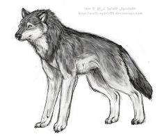 wolf spirit - female gray wolf by Wolf-Spirit89