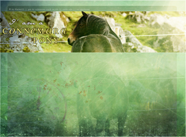 Howrse Layout: Connemara Pony by crystalcleargfx