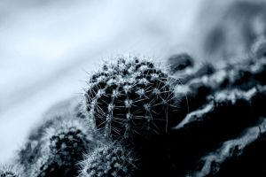 cactus_grey by Andicous