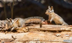 The chase around the log game by jaffa-tamarin