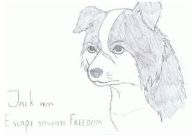 Jack, the border collie by JackOrJohn