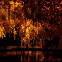 Autumn Trees by JacqChristiaan