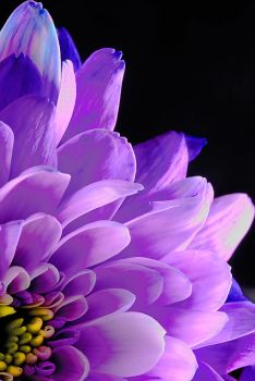 purple and yellow flower by Lightworking