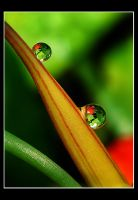 Twin refraction by MonkeymanC3