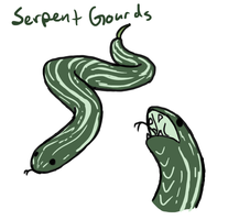 Gourdian Contest entry #2 : Serpent Gourds by MissThunderkin