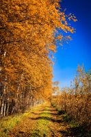 Autumn Days III by OrangeRoom