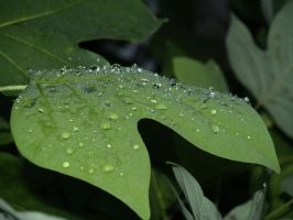 rain on leaves 2 by Irie-Stock