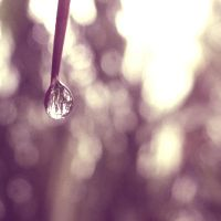 droplet. by fat-sheep2002