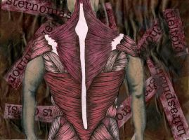 Muscular System by hiddentalent1