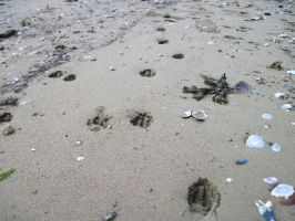 dog paws in the sand by harry-potter-maniac