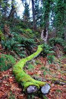 The Mossy Artery. by NatashaShaty