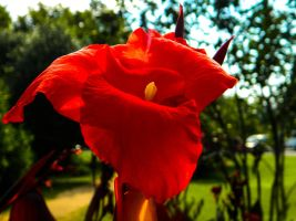 Really Pretty Red Flower by Thishumanbeing