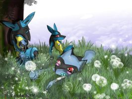 Contest family Lucario by Lu-Lubianse
