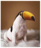 Toucan play that way... by HumanDescent