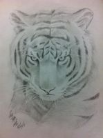 eyes of the tiger by ppleong