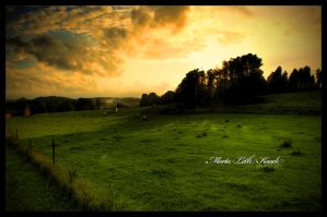 Field of summer by Initio