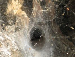 Spiderweb Doorway by concettasdesigns