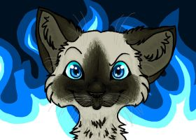 Siamese cat by pSarahdactyls