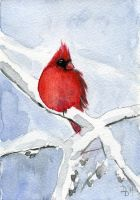 Male cardinal sitting in a winter tree by Divenadesign