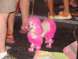 Pink and White Poodle by kikyo4ever