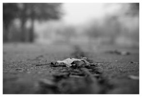 The Last Leaf by shom