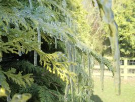 Icicles by PhotographyisArt123