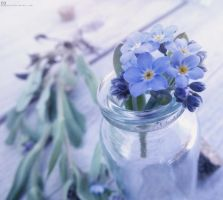Forget Me Not by EugenieA
