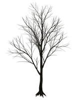 Dark Trees PNG Stock 07 by Roys-Art