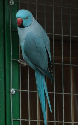Parrot 1 - Blue by fuguestock