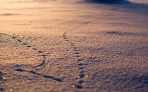 Winter 2012 7 (the Path) by Henrikson