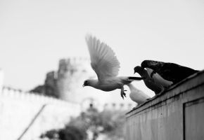 Istanbul Beneath My Wings by CanDaN