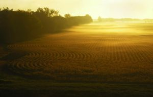 Soybean Sunrise by uncleclick