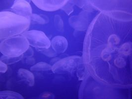 Jellyfish by DragonWhisperer1