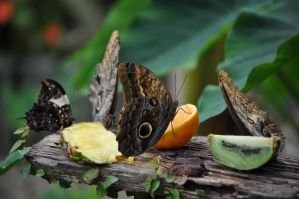 Fruity Feast by rayrussell2000uk