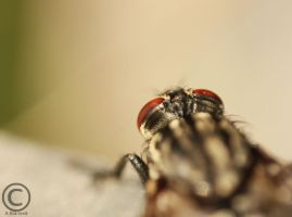 Flies view by Sashay007