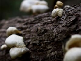 Just a little fungi.... by drewii57